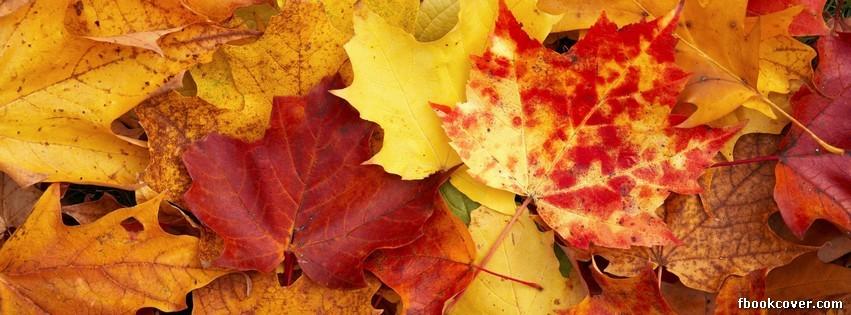 Обложка для фейсбука осень